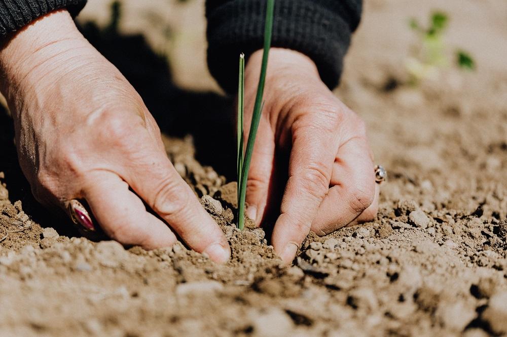 Establecen medidas extraordinarias en materia económica y financiera a favor de las MYPEs y de los pequeños productores agrarios